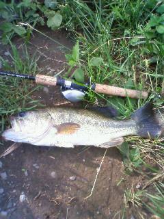たかしです・・・50<br />  釣っちゃいました!